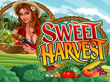 Виртуальный игровой онлайн автомат Sweet Harvest