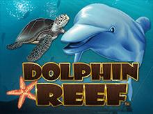 Игровой автомат Dolphin Reef на деньги с HD графикой