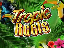 Tropic Reels от Playtech для смелых и азартных онлайн игроков